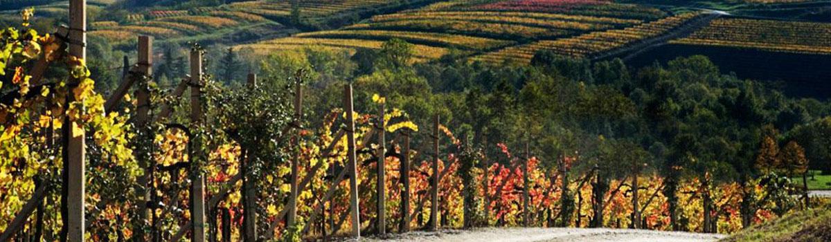 vinarija-beograd-burgundac-vino-rakija-liker-slide-02