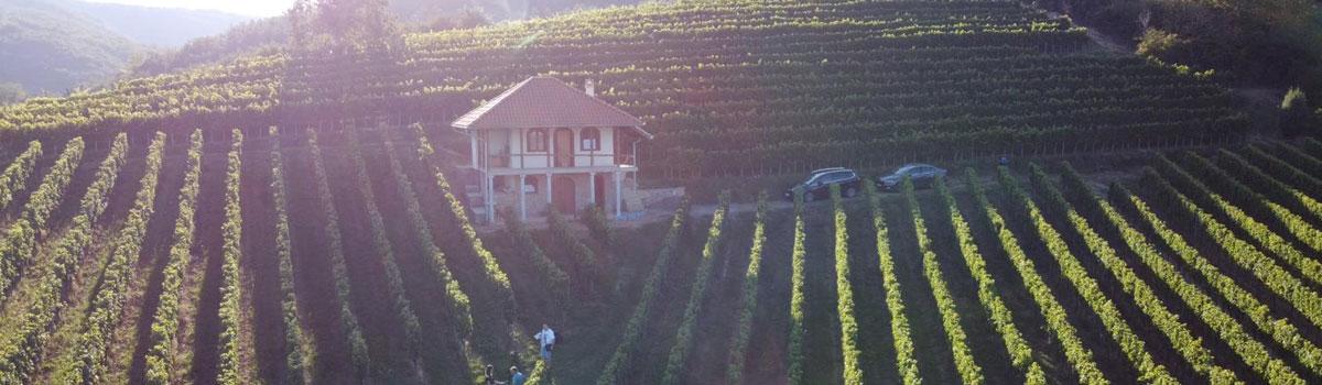 vinarija-beograd-burgundac-vino-rakija-liker-slide-01